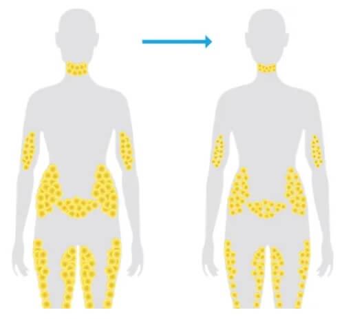 fat loss weight loss normal
